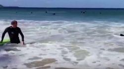 Σέρφερ δέχθηκε επίθεση από μια εξαιρετικά άγρια φώκια σε παραλία του
