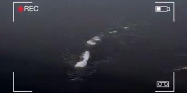 Βίντεο με «τέρας των πάγων» σε ποταμό της Αλάσκα προκαλεί «θύελλα» στο