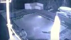Κροκόδειλος επιτέθηκε σε ζευγάρι την ώρα που κολυμπούσε σε πισίνα
