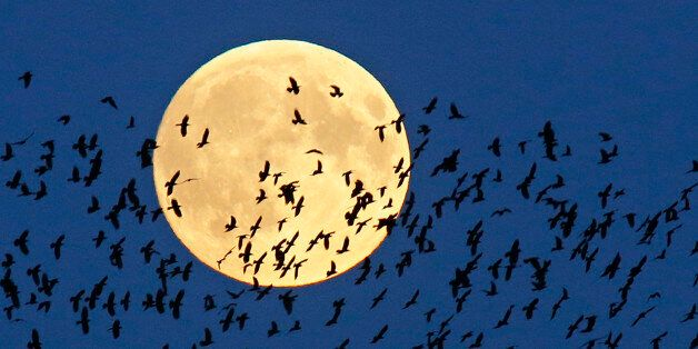 A flock of birds fly by as a perigee moon, also known as a super moon, rises in Mir, Belarus, 95 kilometers...