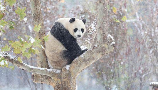 15 υπέροχα ζώα που χάνονται. Ο πλανήτης αντιμέτωπος με την μαζικότερη εξαφάνιση μετά των