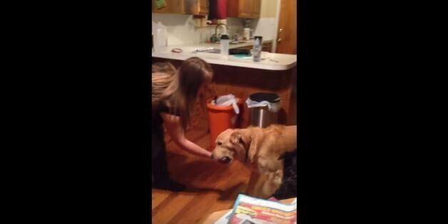 Ο πιο υπάκουος σκύλος του κόσμου. Ανοίγει το ψυγείο και φέρνει μπύρες στο αφεντικό