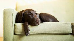 Τα σκυλιά βλέπουν ακόμη και στον ύπνο τους τα αφεντικά