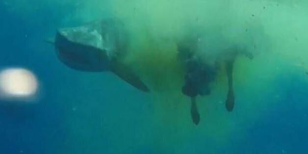 Ένας καρχαρίας καταβρόχθισε μια πελώρια αγελάδα στη μέση του Ινδικού