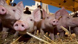 Συναγερμός με την ευρεία χρήση ισχυρών αντιβιοτικών σε ευρωπαϊκές κτηνοτροφικές