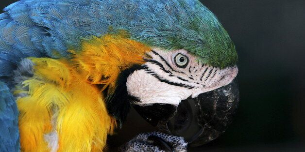 A parrot is seen during a hot summer day in a zoo in Spata near Athens, Greece July 16, 2015. Three weeks...