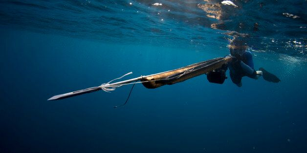 Underwater view of a woman swimming with a speargun, as the tip heads right past the camera in Costa