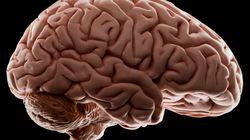 «Καλλιεργούμε εγκεφάλους έξω από το σώμα»: Ένα απίστευτο επιστημονικό