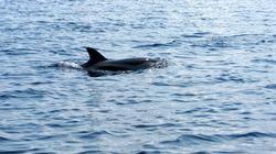 Νεκρό δελφίνι εντοπίστηκε στη