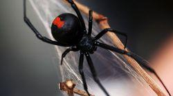 Τον δάγκωσε αράχνη στο πέος για δεύτερη φορά μέσα σε πέντε
