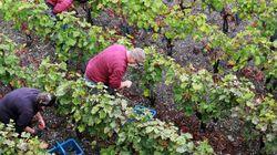 Η Κίνα στέλνει αμπέλια στο διάστημα για να βελτιώσει το κρασί