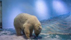 Η «πιο θλιμμένη αρκούδα του κόσμου» ίσως βρει ένα καλύτερο σπίτι στην