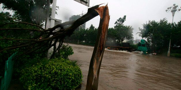 QUANZHOU, CHINA - SEPTEMBER 10: (CHINA OUT) Fallen trees lay on the ground after being hit by Typhoon...
