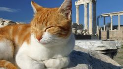 Από τη Γαλινθιάδα και τη Μπαστέτ ως τους Βίκινγκς: Πώς οι γάτες κατέκτησαν τον