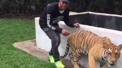 Ο αστέρας της Formula 1, Λιούις Χάμιλτον τρομάζει μια τίγρη (και βγαίνει