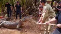 «Σύλληψη» κροκοδείλου 4,3 μέτρων από την αυστραλιανή