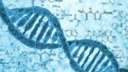 Αμερικανοί επιστήμονες βρήκαν τρόπο να ανακαλούν «μνήμες» από το DNA των ανθρώπινων