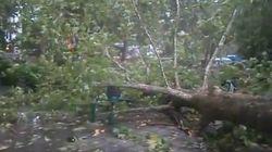 Τρίκαλα: Μεγάλες καταστροφές από την καταιγίδα. Ξεριζώθηκε πλάτανος στην πλατεία της