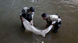 Ψαράς έπιασε το «τέρας» του ποταμού Fraser ύστερα από 40