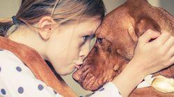 Και ναι, ο εγκέφαλος των σκύλων «πιάνει» όσα λένε οι άνθρωποι όσο και το ύφος