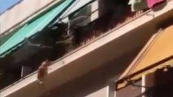 Σάλος με άνδρα που φέρεται να πέταξε σκύλο από τον τρίτο όροφο