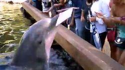 Δελφίνι «βουτάει» iPad από επισκέπτρια σε θαλάσσιο