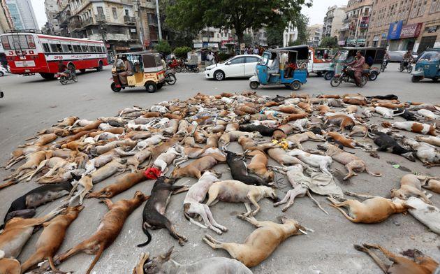Δηλητηρίασαν εκατοντάδες σκυλιά στο