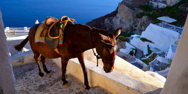 Oia, Greece - August 2015: A donkey is walking up the stairs at the end of a busy day in which he carried...