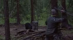 Απαγόρευση του κυνηγιού αρκούδας με ακόντιο στην Αλμπέρτα του Καναδά, εξαιτίας σοκαριστικού