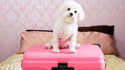 Όλα όσα πρέπει να γνωρίζετε πριν αφήσετε τον σκύλο σας σε