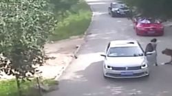 Φονική επίθεση τίγρης σε πάρκο άγριας ζωής στην Κίνα. Σκότωσε μια γυναίκα και τραυμάτισε μια
