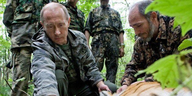 AMUR REGION, RUSSIA - UNDATED: Russian Prime Minister, Vladimir Putin tagging a Siberian Tiger whilst...