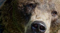 Αρκούδα κλείστηκε και κλειδώθηκε μέσα σε