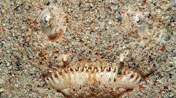 Απλά το πιο απαίσιο ψάρι που έχετε δει (και όχι, δεν είναι