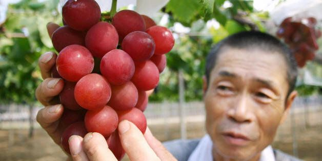 Japanese farmer Tsutomu Takemori displays a cluster of recently-developed 'Ruby Roman' grapes at his...