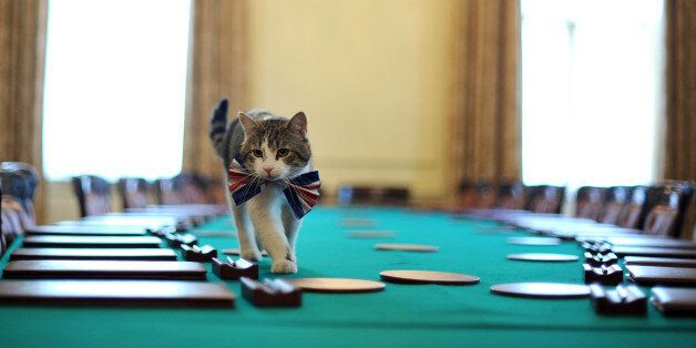 Larry, the 10 Downing Street cat, walks on the cabinet table wearing a British Union Jack bow tie ahead...