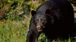 Καναδός πάλεψε με θυμωμένη μαμά-αρκούδα 150 κιλών και γλίτωσε με μερικές