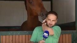 Ο έρωτας δεν κρύβεται!Άλογο παρενοχλεί ρεπόρτερ στον αέρα και γίνεται