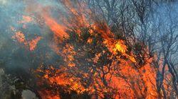 Κρήτη: Σε εξέλιξη δασική πυρκαγιά στο