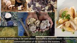 Η «χρυσοφόρα» καλλιέργεια της τρούφας. Το μισό κιλό μπορεί και να πουληθεί ακόμη και 2.200 ευρώ στο