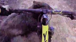 Ποδηλάτης τράκαρε με αρκούδα και τον