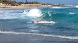 Νεκρή φάλαινα μήκους τεσσάρων μέτρων ξεβράστηκε σε ακτή της