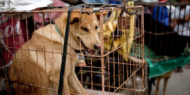 Dogs are seen in cages for sale at a market ahead of a dog meat festival in Yulin in south China's Guangxi...