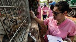 Βρέθηκαν 40 νεκρά τιγράκια κατά τη διάρκεια έρευνας σε ναό στην Ταϊλάνδη (προσοχή, σκληρές