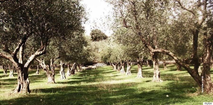 Ρυτόν: Τα ελληνικά προϊόντα που θέλουν να κρατήσουν ζωντανή την γαστρονομική μας