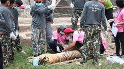 Σύλληψη βουδιστή μοναχού που προσπάθησε να διαφύγει με δέρματα τίγρεων στην