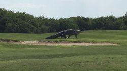 Γιγαντιαίος αλιγάτορας βγήκε βόλτα σε γήπεδο γκολφ στην