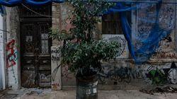Η Παιδεία-Κονσέρβα: Όταν βλέπουμε το δέντρο και χάνουμε το