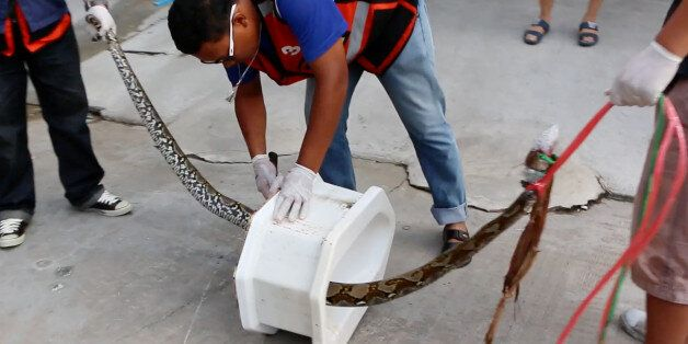 In this image made from video, rescue workers remove a python from a toilet outside a home in Chachoengsao,...
