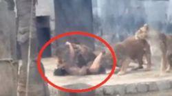 Προσοχή σκληρές εικόνες: Γυμνός άνδρας πηδά μέσα σε κλουβί με λιοντάρια προκειμένου να